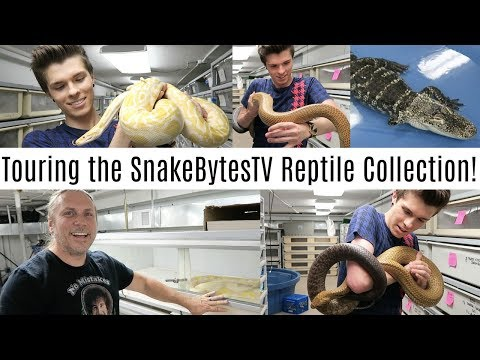 Touring the SnakeBytesTV Reptile Collection! w/ Brian Barczyk