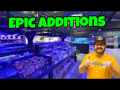 BUYING SALTWATER Inverts From EPIC Tropical Fish Store