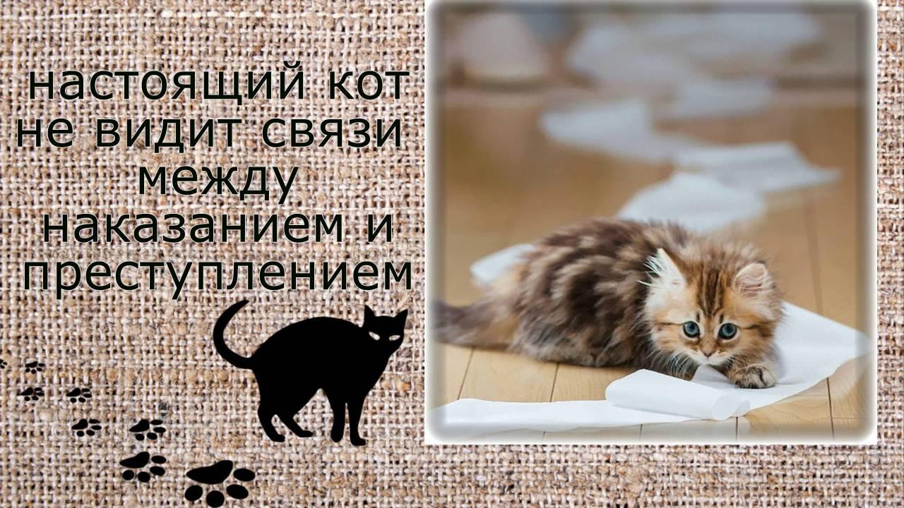 Мясников вячеслав песни про кота