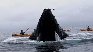Whales Surprise Kayakers in Monterey Bay