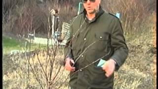 Repeat youtube video Praktično rezanje voćaka
