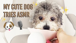 MY CUTE DOG TRIES ASMR *eating, brushing, crunchy sounds