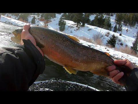 Catching BIG Trout On The Frying Pan River Toilet Bowl!