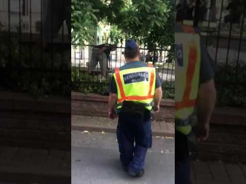 Vaddisznót üldöznek Budapest belvárosában