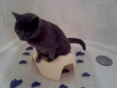 mon chat adore faire pipi dans le pot