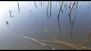 Дождался я Вечернего Клева Рыбалка с Ночевкой на реке Жарим Блины