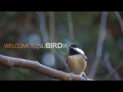 Make Your Yard More Bird-Friendly