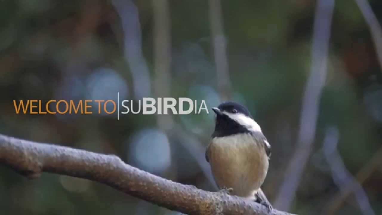 make your yard more bird friendly youtube