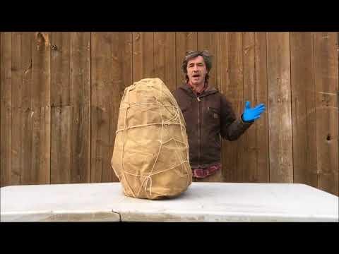 Bigfoot Head unveiling frozen since 1953