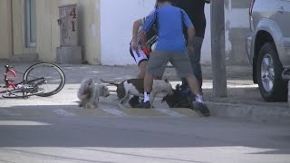 Pit Bull Attacks Miniature Schnauzer In Playas De Tijuana