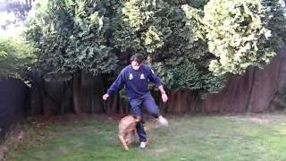 High Level Obedience Dog