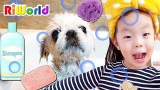 귀여운 강아지 목욕 놀이, 뽀찌야! 목욕하자! bathing the puppy, cute, happy, dog 子犬を入浴する