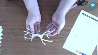 Tearaway Papercraft Elk