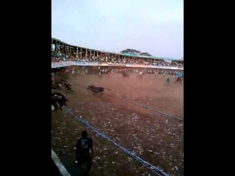 Toros en turbaco 1de enero del 2016