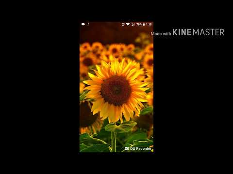 HOW TO DOWNLOAD HD MOVIES ON ANDROID MOBILES