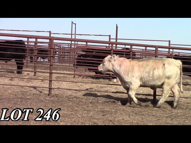 Mead Angus Farms Lot 246