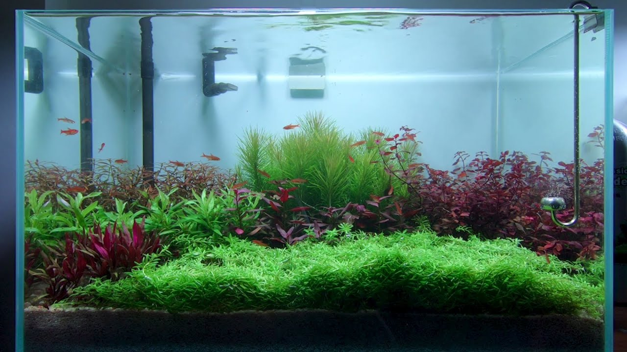 [Step by Step] How To Plant an Aquascape Dutch Style | DIY Aquarium Fish Tank | Mr Decor