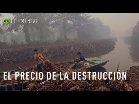 Aceite de palma: El precio de la destrucción  - Documental de RT