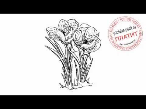 Нарисованные цветы  Как нарисовать красные маки