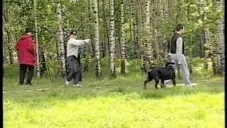 ротвейлер собака - телохранитель rottweiler bodyguard(Это было в середине 90-х, в те времена, когда мы работали в МГКЦ и готовили собак по поиску взрывчатки и нарко..., 2012-02-02T07:20:24.000Z)