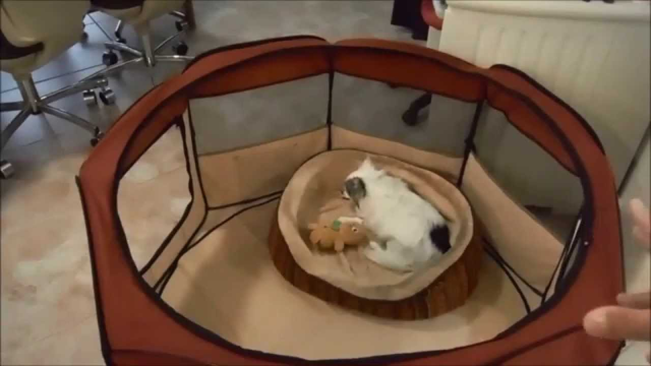Makana Reviews Her New Pet Playpen For Travel Youtube