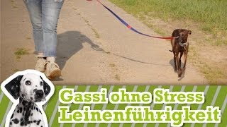 Leinenführigkeit - Hund an der Leine führen - So zieht er nicht mehr an der Leine beim Gassi gehen