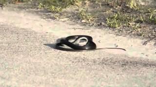 Gambar cover Patır Patır patlayan yılan
