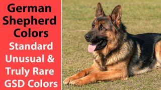 German Shepherd Colors: Standard, Unusual & Truly Rare GSD Colors