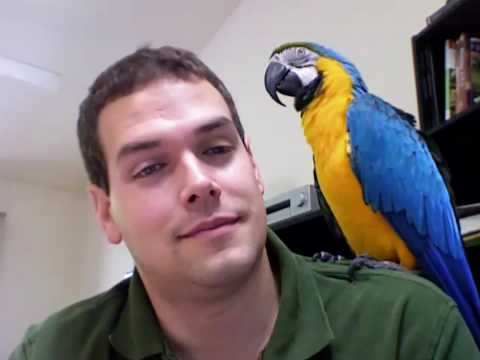 Rachel Talks! Finally on Camera! (Macaw Talking, Parrot Talking)