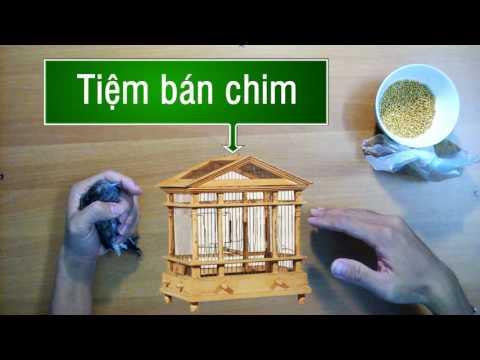 Chim bồ câu Mini - Nhân vật cuối tháng 5 :)