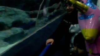 Hijab Kazmi In Chester Blue Planet Aquarium