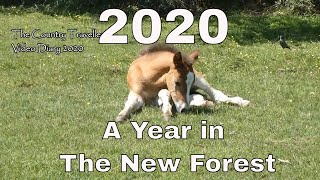 A Year in The New Forest - The New Forest Video Diary Review of 2020 #leavenotrace #thenewforest