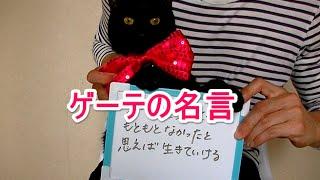 ゲーテの名言について黒猫モモが解説するニャン♪ BGMはこちからお借りし...