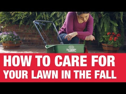 How To Care For Your Lawn in Fall – Ace Hardware