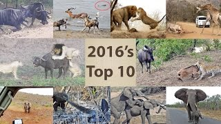 This Year's Top 10 Wildlife Sightings - Compilation