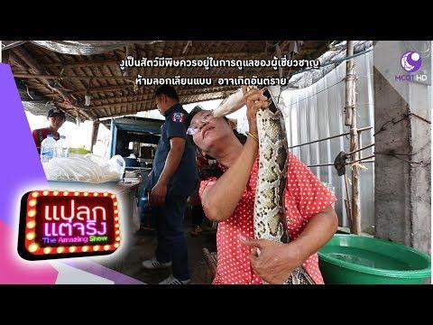 งูหลามยักษ์ รักมาก จ.ฉะเชิงเทรา, นางฟ้ากู่เจิง จ.ภูเก็ต - วันที่ 20 Oct 2018