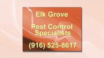 Pest Control in Elk Grove, CA (916) 525-8617 / CALL US TODAY!