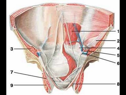 Laparoscopic Hernia Repair Tapp Youtube