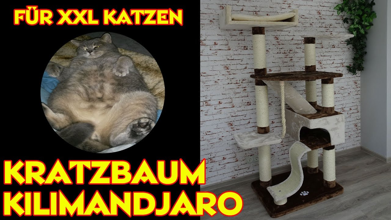 katzen kratzbaum kilimandjaro plus f r xxl katzen youtube. Black Bedroom Furniture Sets. Home Design Ideas