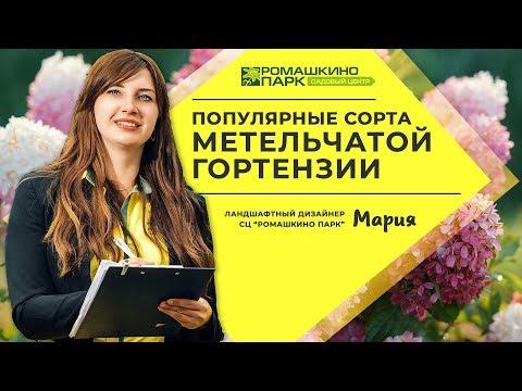 Гортензия метельчатая: лучшие сорта для выращивания в России