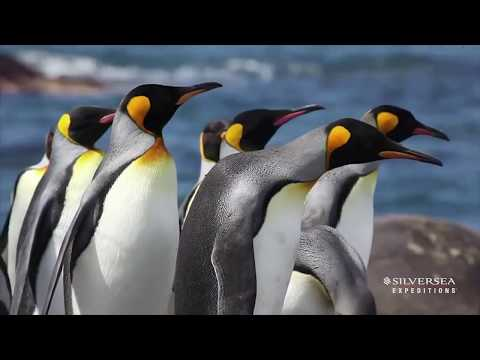 Silversea Expeditions - Insight Into Antarctica