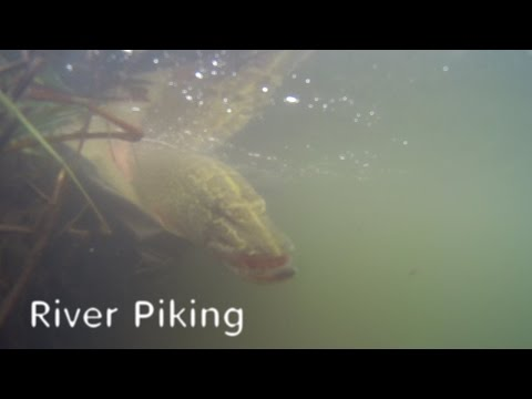 Pike Fishing On The River Test : Bates Fishing