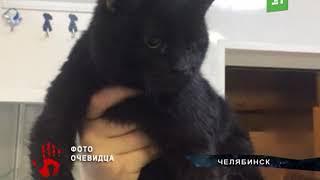 Девушка спасла кота, которого хозяева решили усыпить