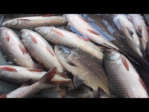 Abdullapur Fish Market   Travel Bangla 24   Wholesale Fish Market Bangladesh