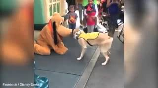 Pawesome moment excited canine meets iconic Disney dog Pluto