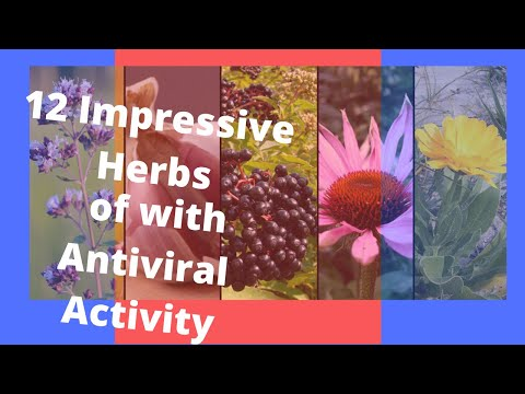 antiviral herbs basic herbal remedies herbal remedies for a viral cold