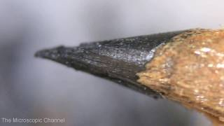 Sharpening A Pencil Under the Microscope