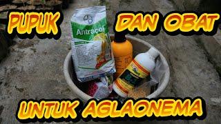 Download lagu Aglonema pupuk dan obat MP3