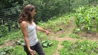 The Summer Garden + Stella