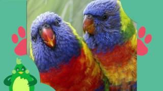 ТОП 5 самых милых видов попугаев